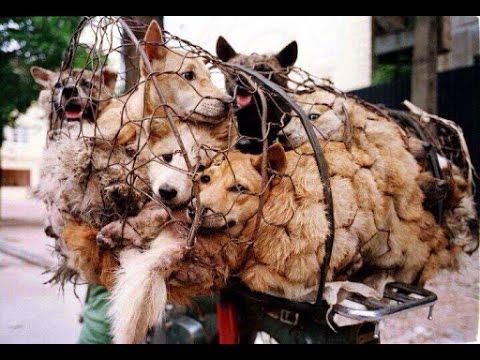 poordogs